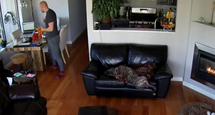 Sleepy dog unfazed after falling off couch