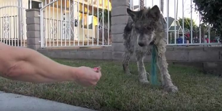 They didn't know if they were rescuing a wolf, dog or coyote — then they got the test results