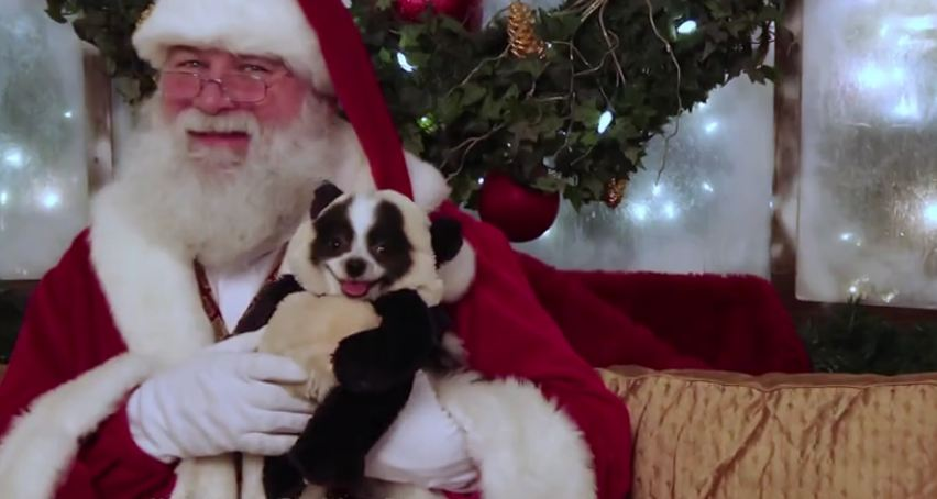 Funny panda dog meets Santa Claus