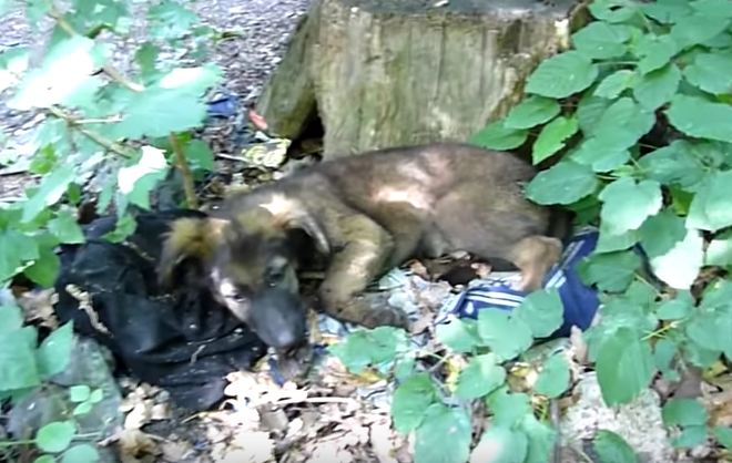 Puppy abandoned in the woods is about to have her life changed forever