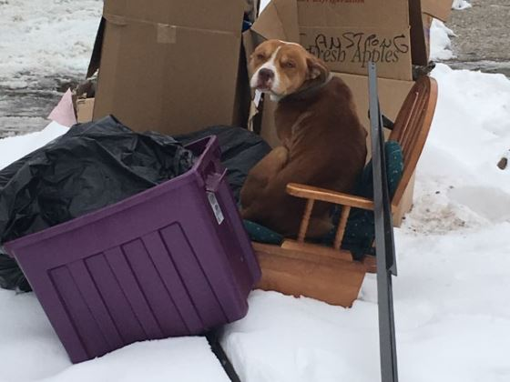 Dog Left at Corner With Garbage After Family Moved Out Seeking New Home