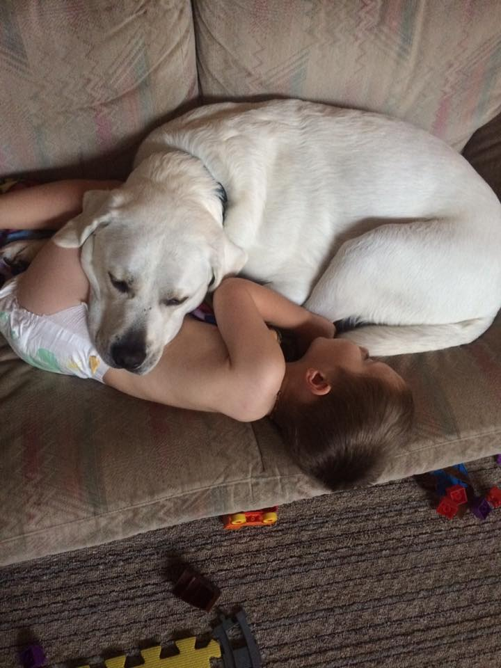 Sweet Dog Comforts Boy With Autism Every Time He Has Nightmares