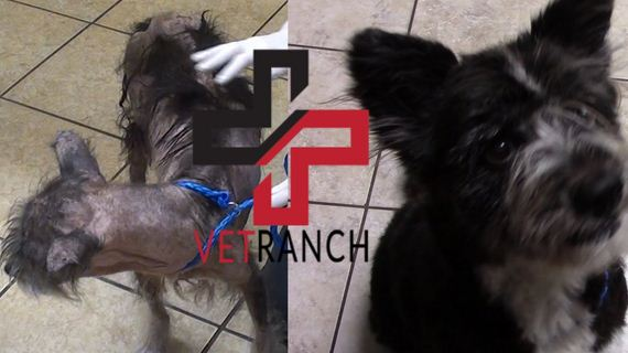 Hairless dog surrendered to Vet Ranch doesn't even look the same now