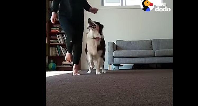 This Irish Stepdancing Dog Has Seriously Impressive Skills
