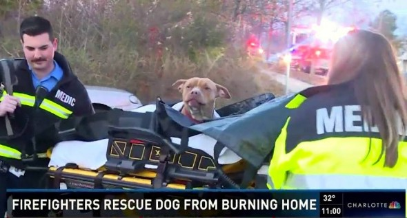 Pit Bull Who Died in House Fire Is Brought Back to Life by Hero Firefighters