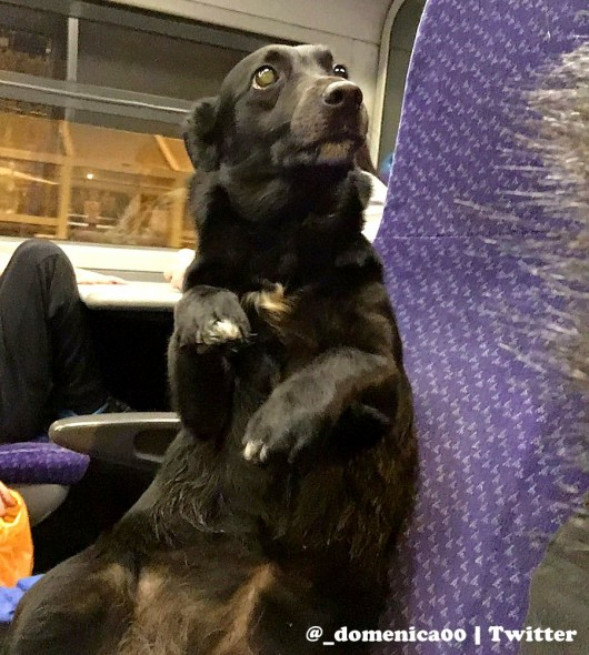Dog on a Train Tries to Convince Fellow Passengers That He's a Person Like Anyone Else