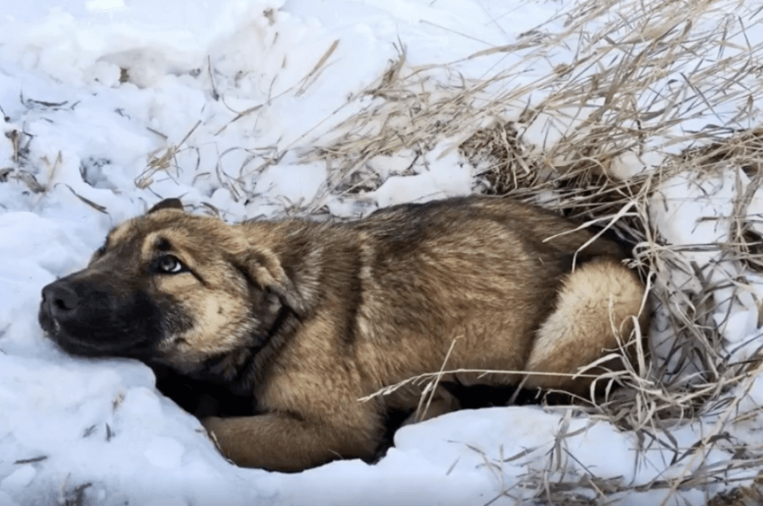 Teens Notice Stray Puppy Shivering In The Snow, Then Realize She's Hurt And Can't Move