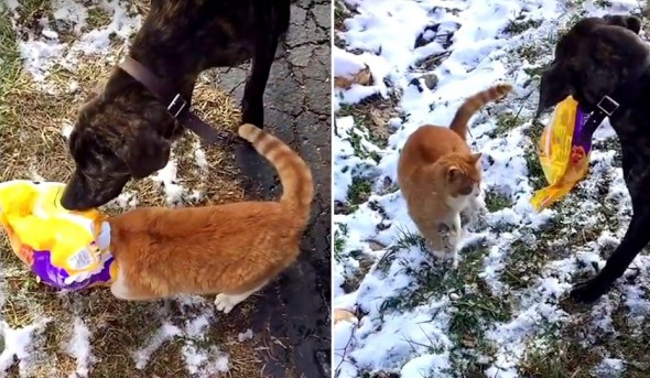 Dog Helps Out an Unfortunate Cat With a Bag Stuck on Its Head