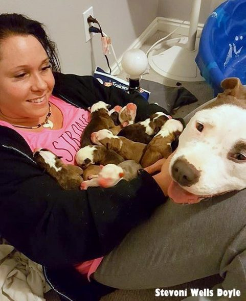 """New Dog Mom """"Gives"""" All of Her Puppies to Her Foster Mom"""