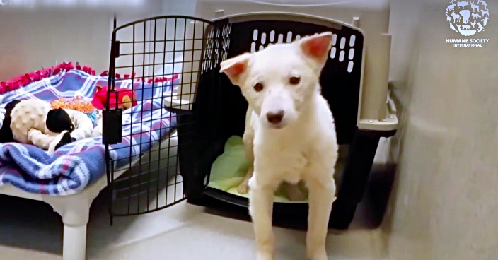 A Puppy Who Has Never Even Seen A Bed Before, Takes Her First Steps Toward A New Life