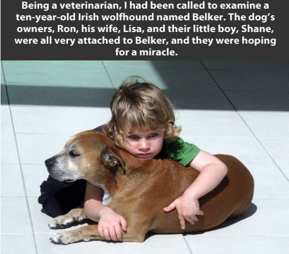 Hey, Join Your Friends On PMG! Little boy finds out his dog needs to be put down — his reaction stuns everyone