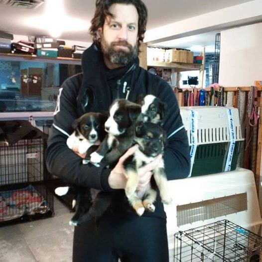 Man Risks Arctic Cold and Snow Every Day to Make Sure Shelter Dogs Get Walked