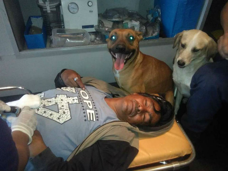 Dogs refuse to leave owner's side, jump in ambulance and ride to hospital with him