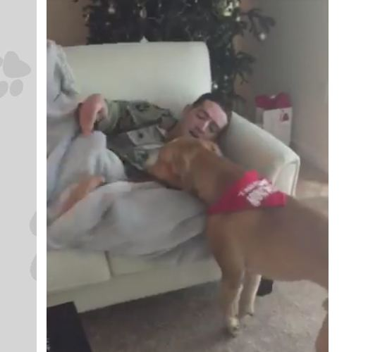 Dog sniffs something under the blanket — and that's when he realizes it