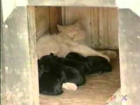Hey, Join Your Friends On PMG! A dog had a litter of puppies, but the neighborhood cat stole them all
