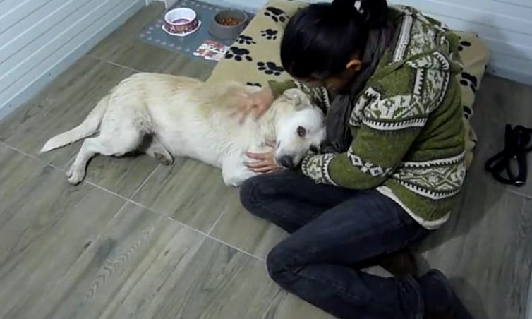 Rescue of homeless dog suffering from cancer who only wanted to be hugged