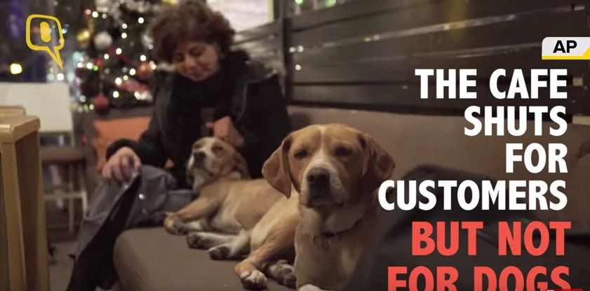 Cafe opens its doors at night and allows stray dogs to come inside and stay warm during the winter