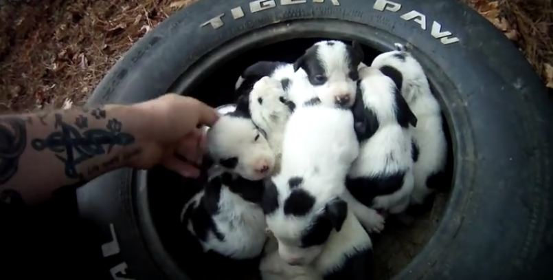 Man Finds Abandoned Mama Dog, Then Walks In The Woods To Discover 9 Puppies