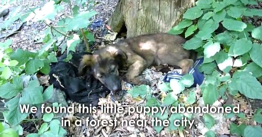 Puppy Abandoned In The Woods Gets The Rescue That Changes Her Life Forever