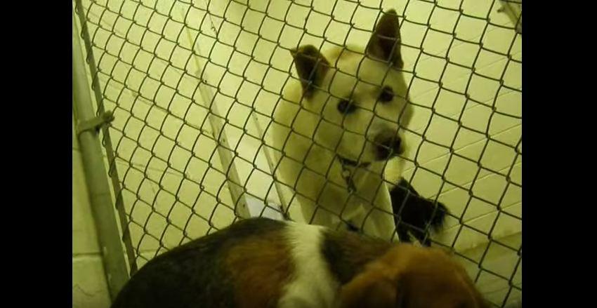 Everyone ignored this scared shelter dog until he showed up