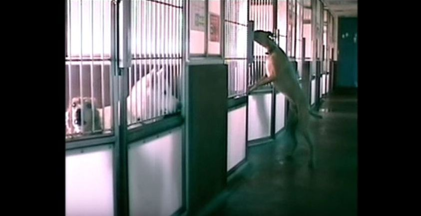 Something odd kept happening at this shelter, so they set up a camera