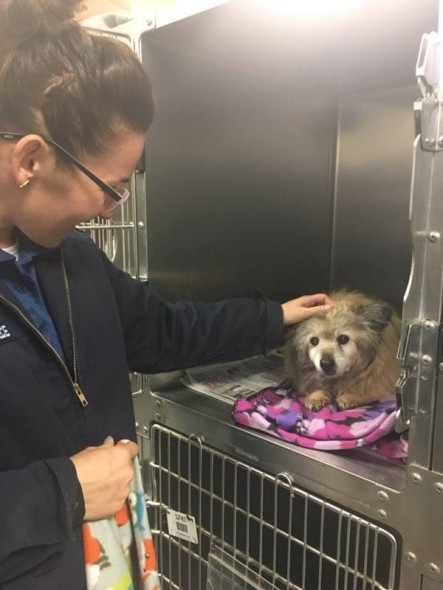 """Picture of Dog With """"Terminal Illness"""" Moves Woman to Drop EVERYTHING and Adopt Him"""