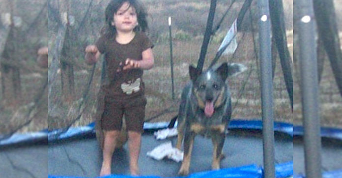 3-Year-Old Vanishes From Home. 15 Hours Later, They See A Dog Crouched Over Her In The Woods