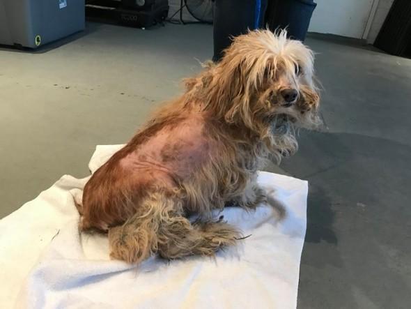 Matted, Frostbitten Dog Saved by a Good Samaritan