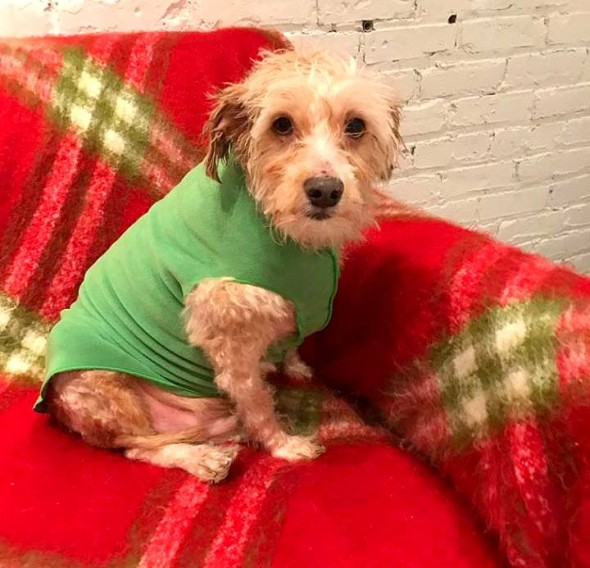 matted-frostbitten-dog-saved-by-a-good-samaritan7