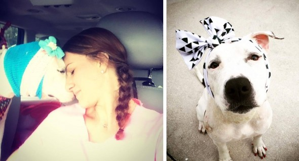 One-Eared Former Bait Dog Sent Dozens of Headbands for Christmas