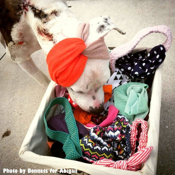 one-eared-bait-dog-sent-dozens-of-headbands-for-christmas5