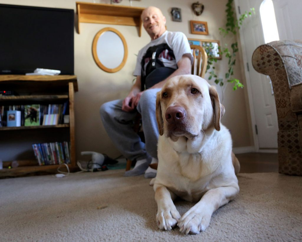 Dog Saves His Human's Life After Rollover Accident by Leaving the Scene and Getting Help