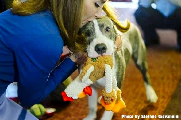 pit-bull-puppy-who-stopped-rape-is-honored2