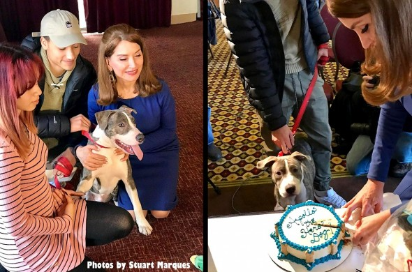 pit-bull-puppy-who-stopped-rape-is-honored3