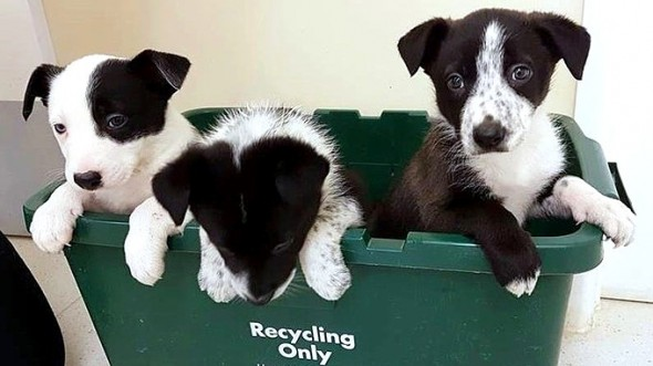 Puppies Left to Die in the Woods Saved by a Dog Out for a Walk
