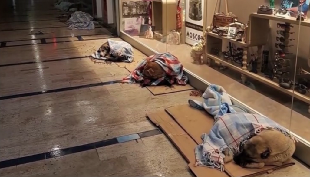 Strangers Band Together To Help Comfort Stray Dogs And Keep Them Warm During The Harsh Winter