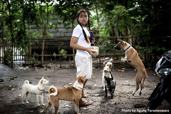 12-Year-Old Girl Has Rescued Nearly 60 Balinese Street Dogs