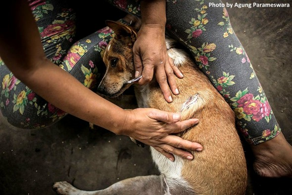 year-old-girl-has-rescued-29-street-dogs2