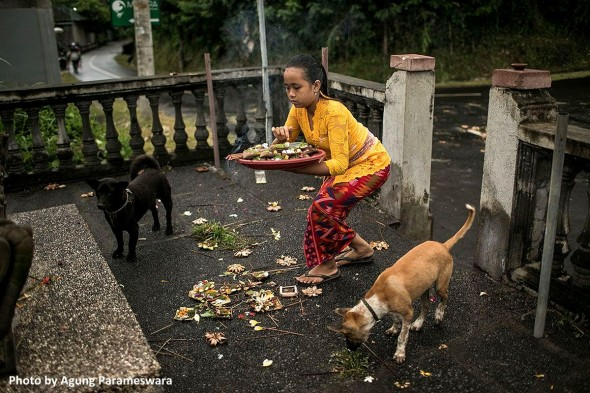 year-old-girl-has-rescued-29-street-dogs3
