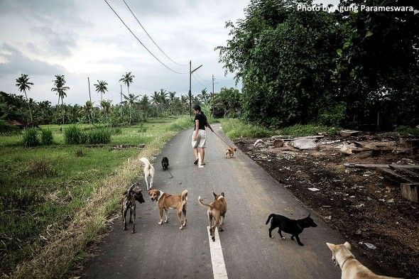 year-old-girl-has-rescued-29-street-dogs4