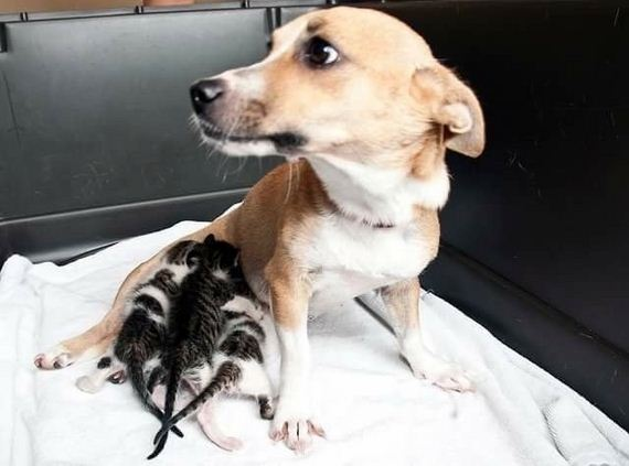 Mama Dog Was Separated From Her Puppies And Left At A Shelter, But Her Job As A Mother Wasn't Over
