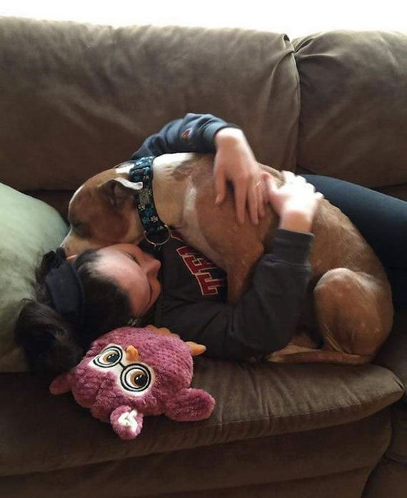 Pit Bull is so grateful for a rescue, he can't stop hugging