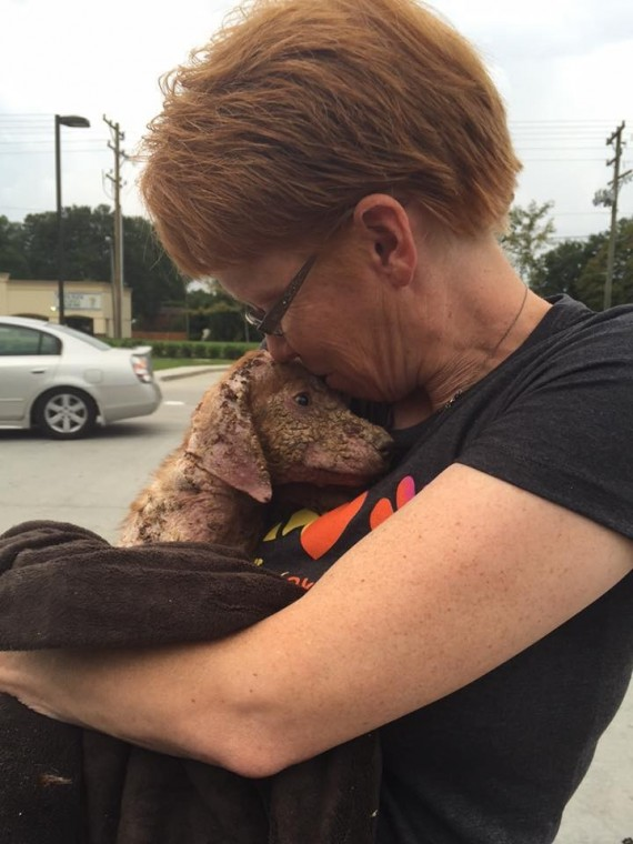 Dog thrown out of a pickup truck just happy to be rescued