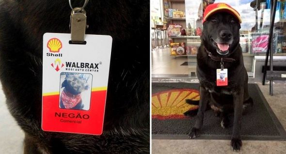 Dog Abandoned at a Shell Gas Station Is Now An Official Employee There