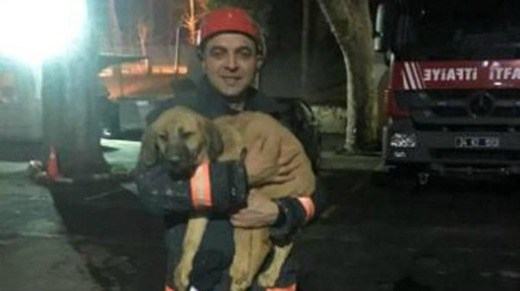 Rescued: Puppy stuck in 292 feet deep well for 10 days