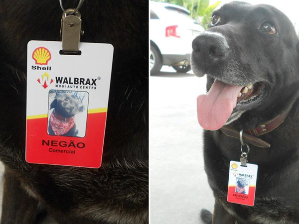 Dog abandoned at a gas station becomes full-time employee
