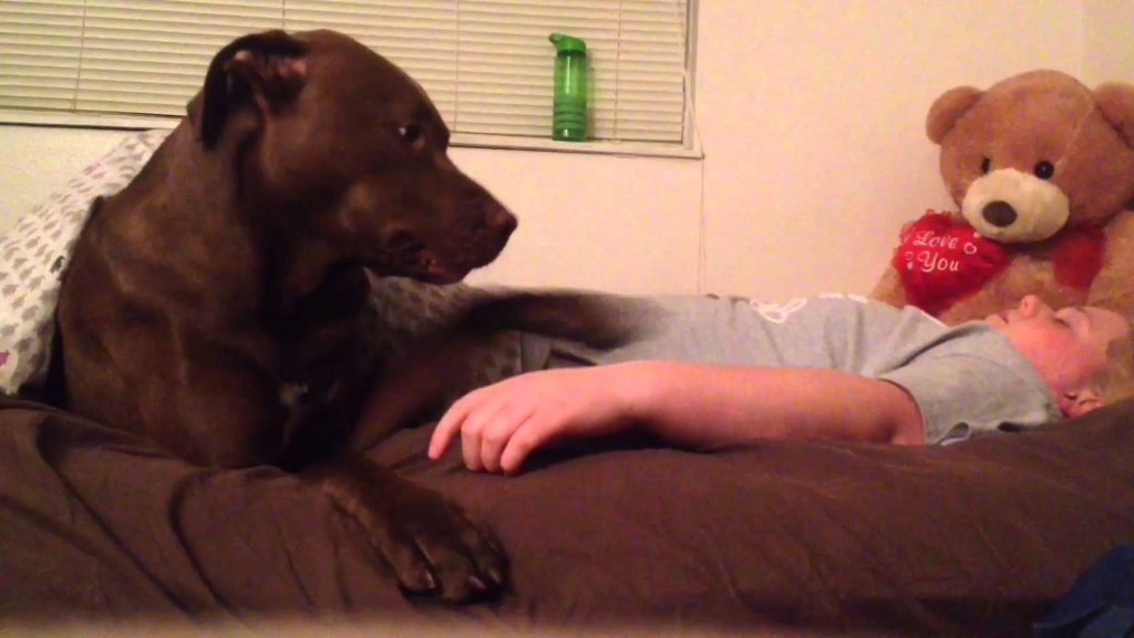 Dog can sense something's wrong with his owner, knows exactly what to do—amazing!