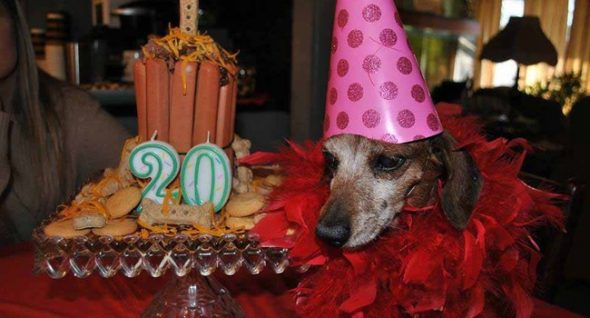 Woman Honors Mother's Dying Wish; Throws Party For 20-Year-Old Dog