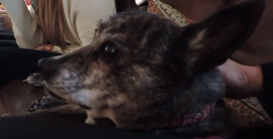 Elderly dog knows exactly what she wants, and how she tells her owner is too precious