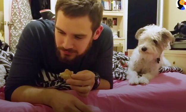 Watch the dog's reaction when he's caught staring at dad's snack